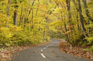 紅葉の森と道路の写真素材 [FYI04673498]