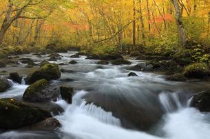紅葉の奥入瀬渓流の写真素材 [FYI04673499]