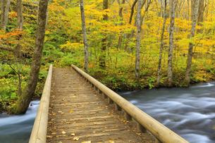 遊歩道と紅葉の奥入瀬渓流の写真素材 [FYI04673506]