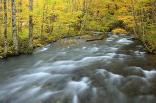 遊歩道から望む紅葉の奥入瀬渓流の写真素材 [FYI04673507]