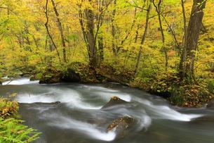 紅葉の奥入瀬渓流の写真素材 [FYI04673508]