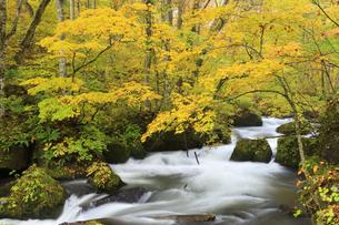 紅葉の奥入瀬渓流の写真素材 [FYI04673509]