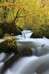 紅葉の奥入瀬渓流の写真素材 [FYI04673510]