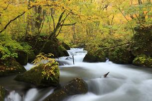 紅葉の奥入瀬渓流の写真素材 [FYI04673511]