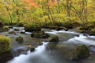 紅葉の奥入瀬渓流の写真素材 [FYI04673512]