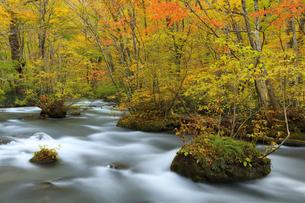 紅葉の奥入瀬渓流の写真素材 [FYI04673513]