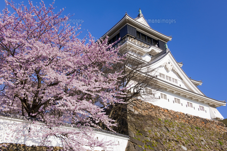 桜咲く小倉城の写真素材 [FYI04673742]