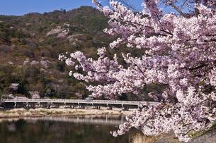 桜咲く嵐山の写真素材 [FYI04673747]