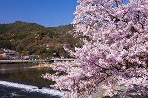 桜咲く嵐山の写真素材 [FYI04673748]