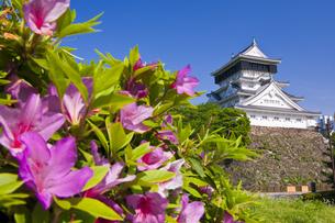つつじと小倉城の写真素材 [FYI04673765]