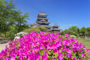 つつじ咲く松本城の写真素材 [FYI04673775]