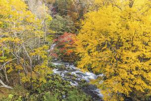 紅葉の間を縫う川の写真素材 [FYI04673853]