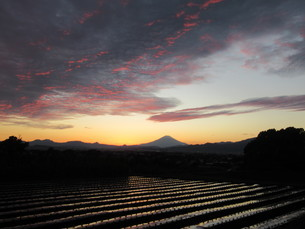 夕方の富士の写真素材 [FYI04673953]