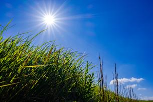 【自然風景】太陽がまぶしい草原の様子 ローアングルの写真素材 [FYI04673961]