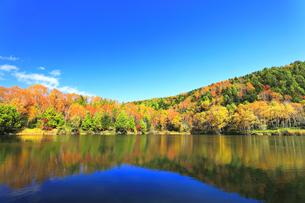 秋の志賀高原 木戸池と紅葉の写真素材 [FYI04674069]