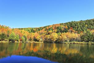 秋の志賀高原 木戸池と紅葉の写真素材 [FYI04674070]