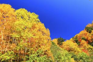 紅葉と秋の空の写真素材 [FYI04674071]