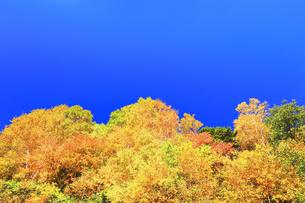 紅葉と秋の空の写真素材 [FYI04674072]