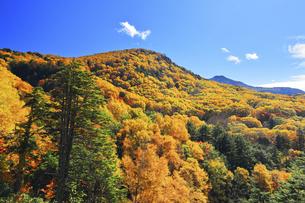 秋の志賀高原 紅葉の山並みの写真素材 [FYI04674073]