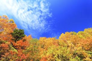 秋の空と紅葉の写真素材 [FYI04674074]