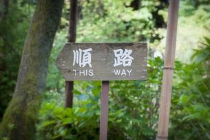 森の中に設置されている「順路」と書かれた案内板の写真素材 [FYI04674293]