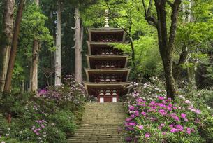 シャクナゲ咲く室生寺の写真素材 [FYI04674383]