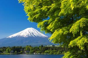 河口湖と富士山の写真素材 [FYI04674387]