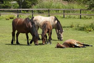 木曽馬の写真素材 [FYI04674391]