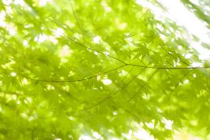 木々の写真素材 [FYI04674397]