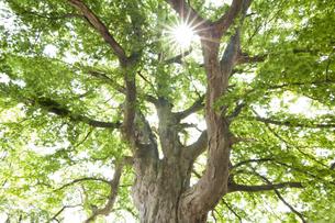 木と太陽の写真素材 [FYI04674399]