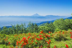 甘利山レンゲツツジと富士山の写真素材 [FYI04674407]