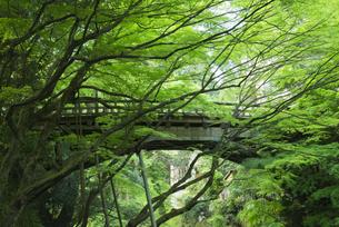 こおろぎ橋の写真素材 [FYI04674409]