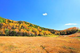 秋の志賀高原 田ノ原湿原と紅葉の写真素材 [FYI04674430]