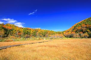 秋の志賀高原 田ノ原湿原と紅葉の写真素材 [FYI04674436]