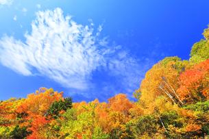 秋の空と紅葉の写真素材 [FYI04674438]