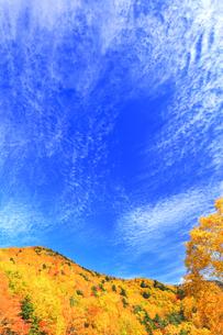 秋の空と紅葉の写真素材 [FYI04674441]
