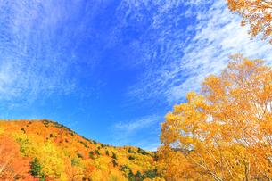 秋の空と紅葉の写真素材 [FYI04674444]