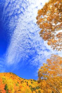 秋の空と紅葉の写真素材 [FYI04674447]
