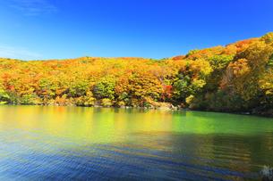 秋の志賀高原 琵琶池と紅葉の写真素材 [FYI04674449]