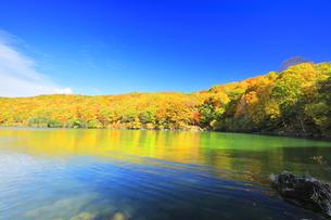 秋の志賀高原 琵琶池と紅葉の写真素材 [FYI04674455]