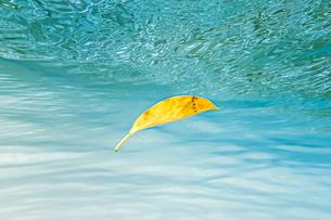 枯葉さえも美しく映るイダの浜の写真素材 [FYI04674503]