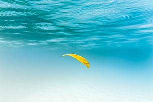 枯葉さえも美しく映るイダの浜の写真素材 [FYI04674504]