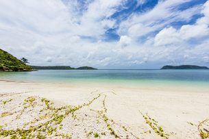 八重山グリーンとエメラルドグリーンの海に囲まれたイダの浜の写真素材 [FYI04674512]