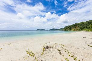 八重山グリーンとエメラルドグリーンの海に囲まれたイダの浜の写真素材 [FYI04674513]