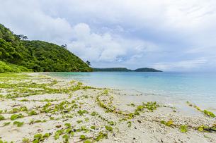 八重山グリーンとエメラルドグリーンの海に囲まれたイダの浜の写真素材 [FYI04674517]
