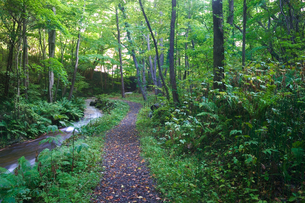 森の遊歩道と渓流の写真素材 [FYI04674567]