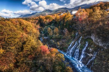 美瑛町白ひげの滝の紅葉の写真素材 [FYI04674677]