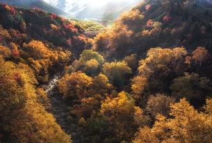 上富良野町十勝岳温泉の紅葉の写真素材 [FYI04674678]