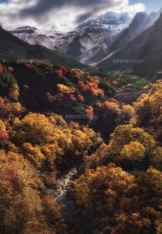 上富良野町十勝岳温泉の紅葉の写真素材 [FYI04674679]