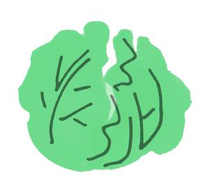 キャベツのイラスト素材 [FYI04675015]